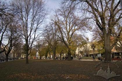 Алеї проспекту Свободи, з правого боку – колишня вул. Гетьманська.