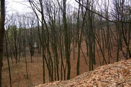 """Парк """"Знесіння"""", пагорби історичного Кайзервальду."""